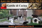 """Rifugio """"Il Paduletto"""" - Gattile di Cecina"""
